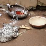 Ritual diario vudu en Detohou (Benin)