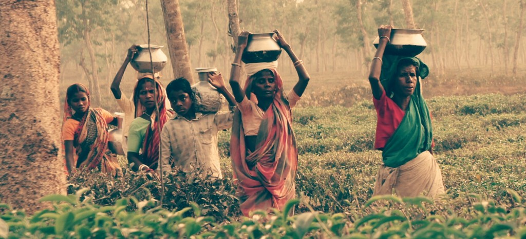 Women working at the tea plantations in Bangladesh