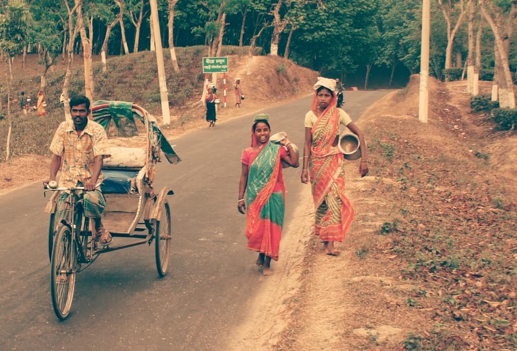 Pacific life around Srimongol or Sreemangal, north east of Bangladesh
