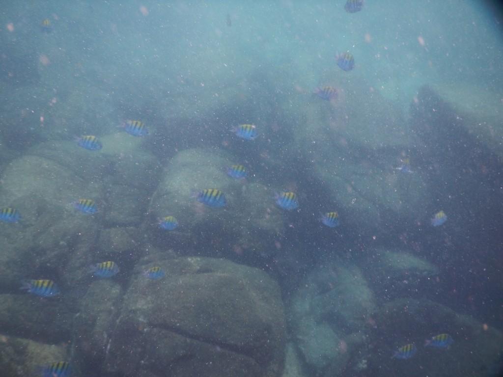 Snorkel en Isla Contadora