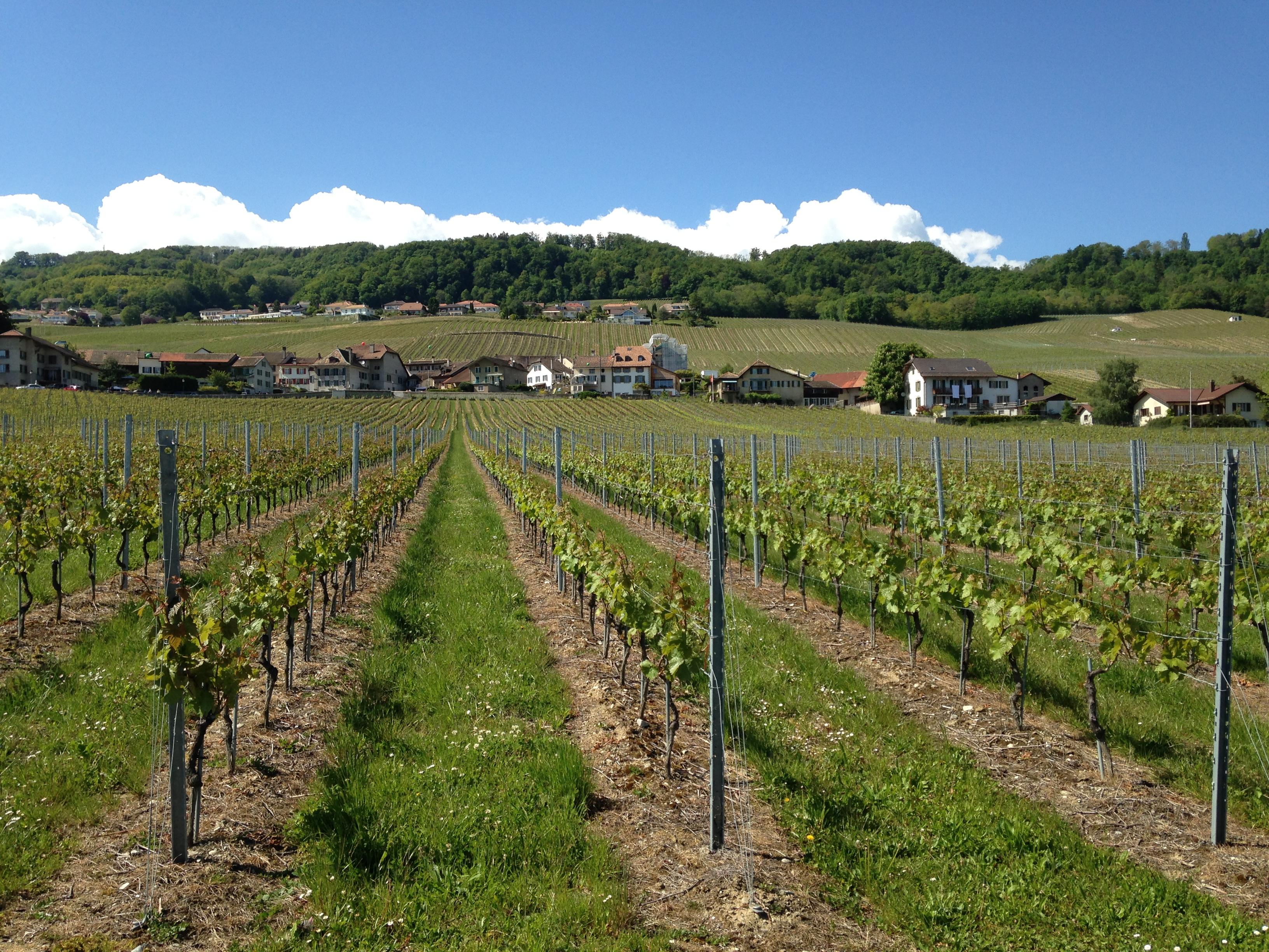Región de vinos de Mont-sur-Rolle
