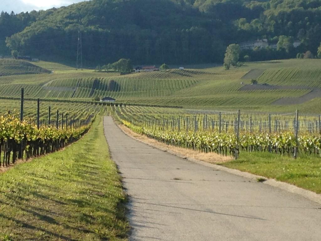 caminos entre viñedos