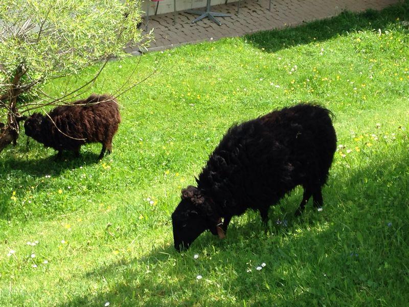 Más amigos animales por el camino :)