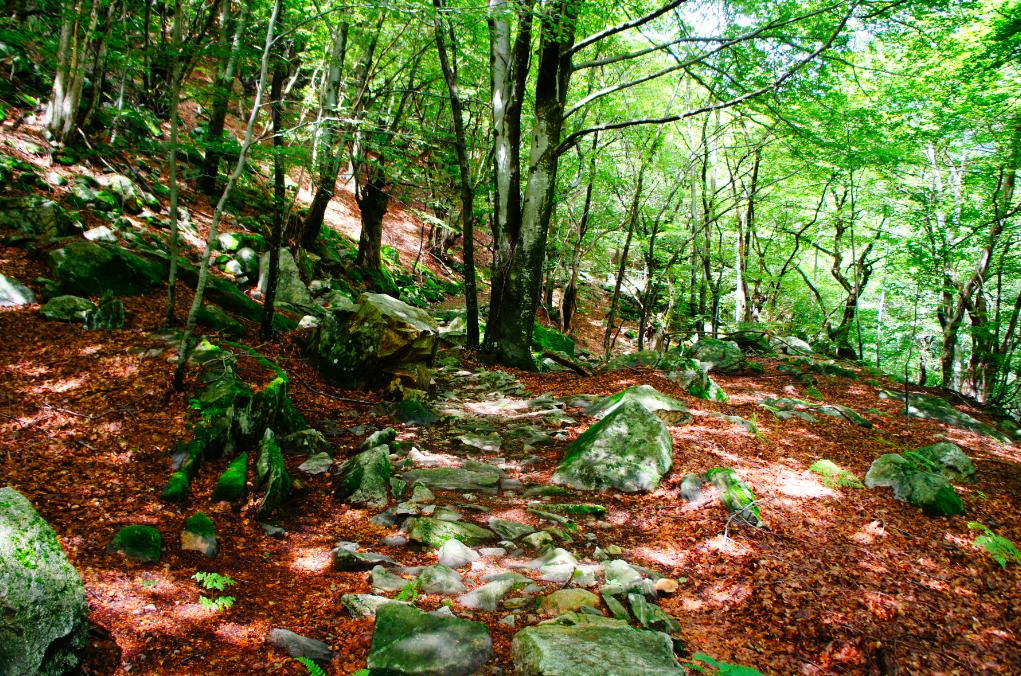 Trekking por el valle Maggia