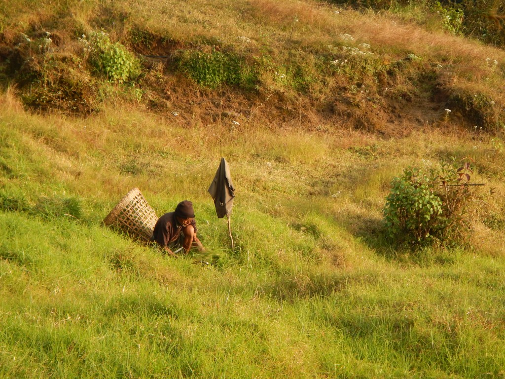 Hombre recogiendo comida para los bufalos