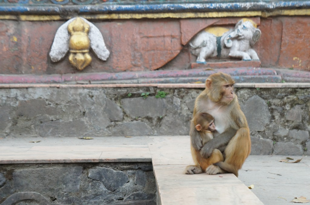 Swayambhunath temple, the real owners of the temple
