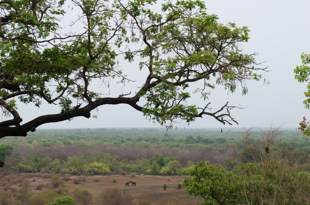 Entrenad vuestro ojo y encontraréis a dos elefantes uniendo sus trompas :-)