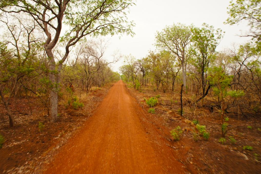 Los caminos del safari, a pie o en 4x4
