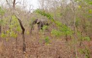 Familia de elefantes a pocos metros de nosotros, a pie