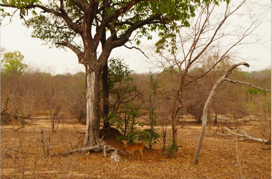 Antilopes, o la familia de Bambi :-)