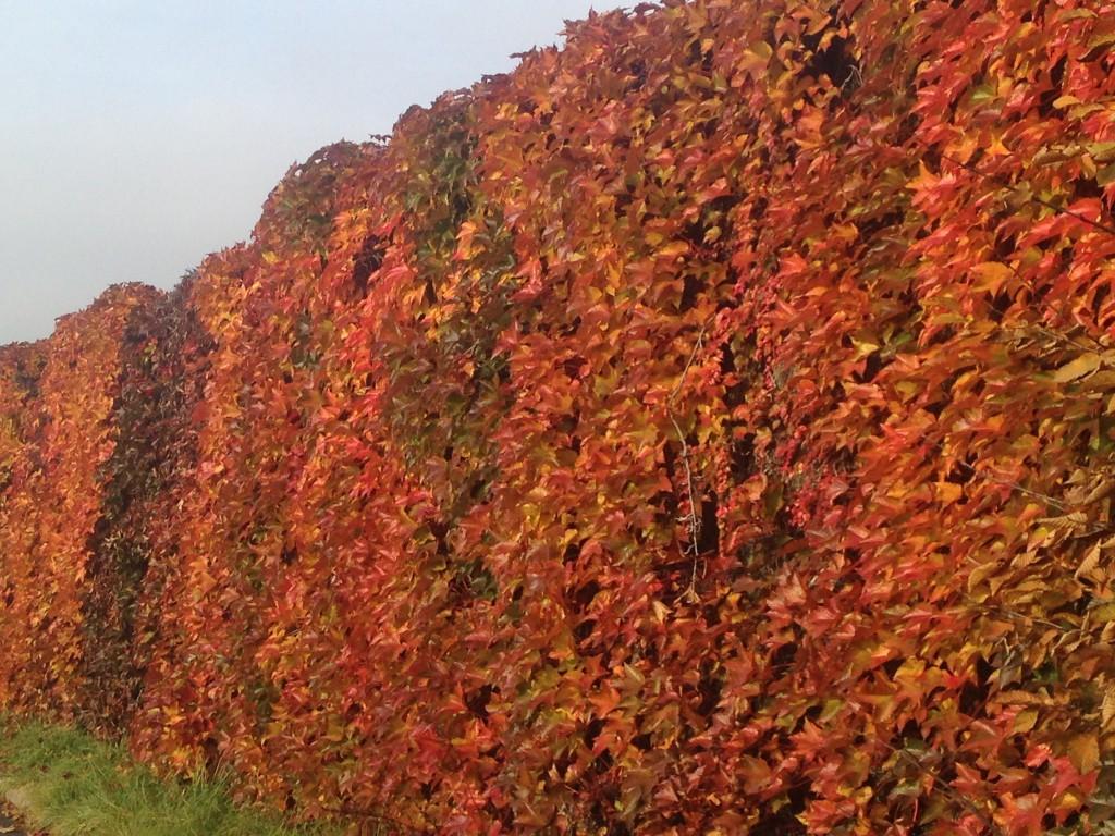 switzerland autumn